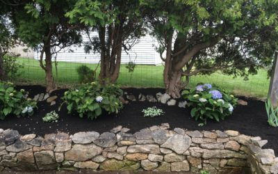 Lawn and Garden Care in Drought Conditions