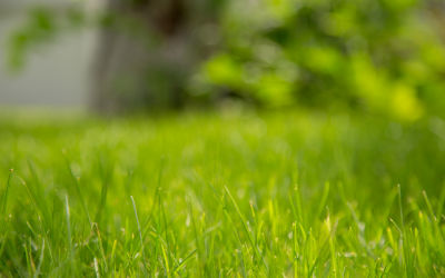Lawn Care Tips – Mowing