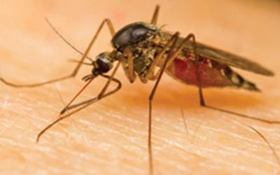 Understanding Mosquito Dangers