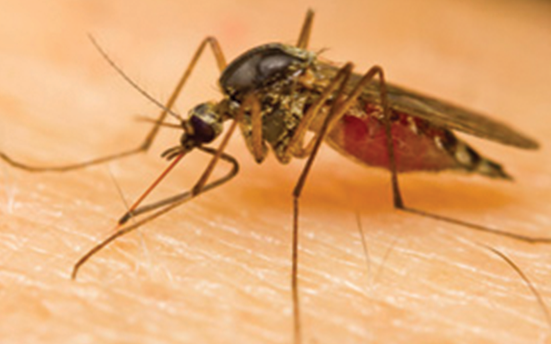 MosquitoDangers