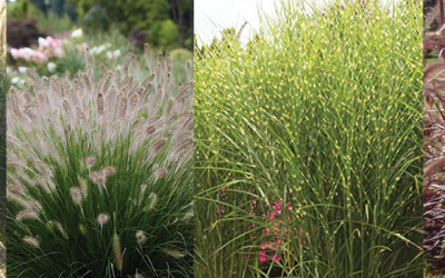 Best Ornamental Grasses for Maine Landscapes